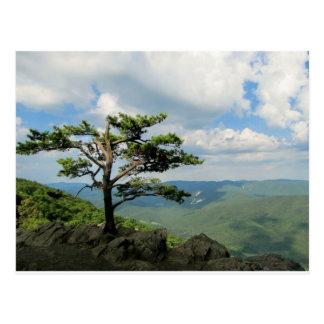 nature pics postcard