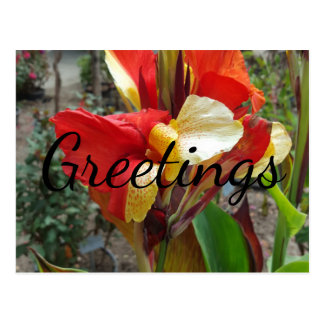 Nature Red Flower Floral Photography Postcard