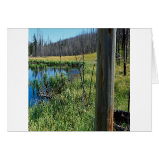 Nature Reserve Wilderness Water Hole Greeting Cards