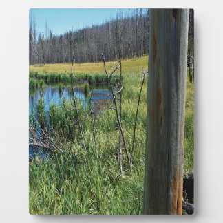 Nature Reserve Wilderness Water Hole Photo Plaques