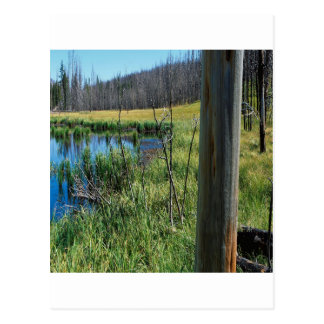 Nature Reserve Wilderness Water Hole Postcard
