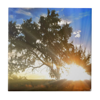 Nature scene, Sunset behind old tree 01 Small Square Tile