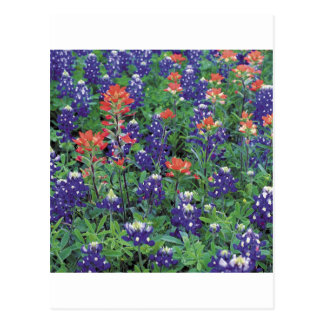Nature Spring Flower Purple Spring Postcard