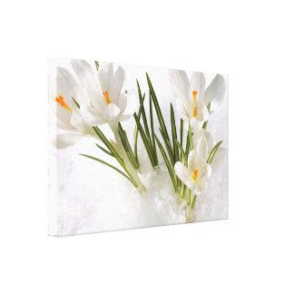 Nature Spring White Croxus Flowers Canvas Canvas Print