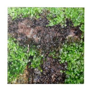 Nature Small Square Tile