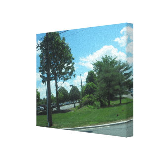 Nature Tree Green SkyView CherryHill NJ USA FUN 99 Gallery Wrapped Canvas