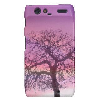 Nature Trees Winter Purple Motorola Droid RAZR Cases