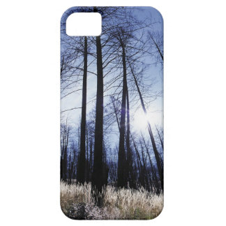 Nature Trees Winter Sunny Morning iPhone 5/5S Covers