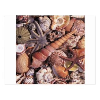 Nature Water Assorted Shells Beach Postcard