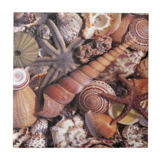 Nature Water Assorted Shells Beach Small Square Tile