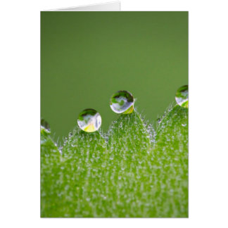 Nature Water Drops Connect with Cosmic Card