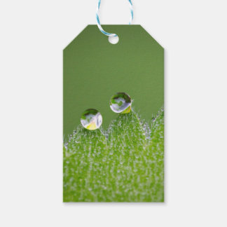 Nature Water Drops Connect with Cosmic Gift Tags
