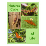 Natures Cycle of Life Posters