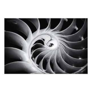 Nature's Design Photo Print