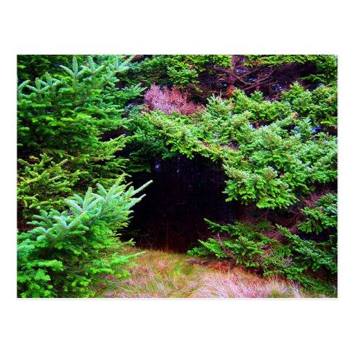 Nature's Hideout Postcard