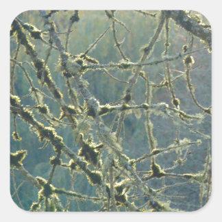 Nature's Lace Square Sticker