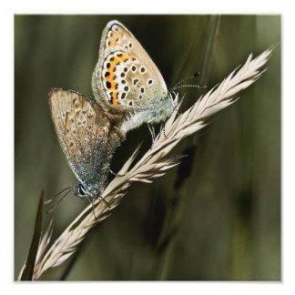 naughty butterflies 12'' x 12'' photo art
