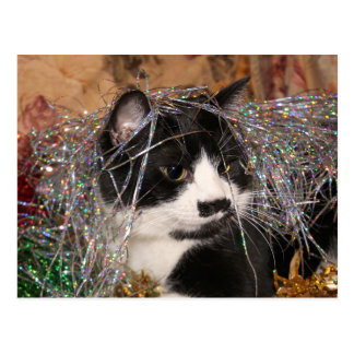 Naughty tuxedo kitty Christmas Postcard