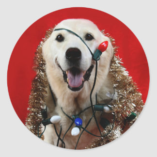Naughty Yellow lab Christmas Classic Round Sticker