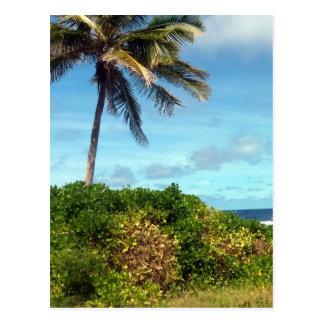 nauru palm postcard