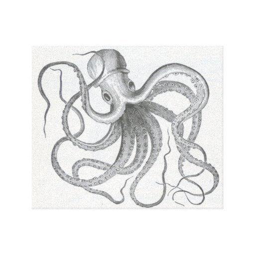 Drawing Lines With Canvas : Nautical steampunk octopus vintage kraken drawing canvas