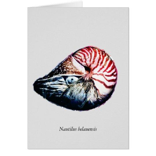 Nautilus belauensis card