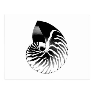 Nautilus shell - black, grey and white postcard