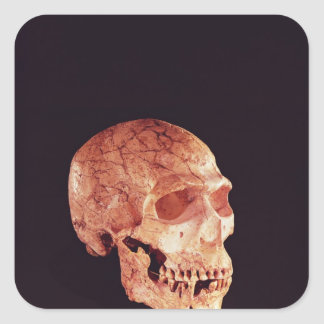 Neanderthal Skull, discovered on Mt Carmel Square Sticker
