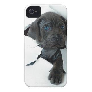 Neapolitan Mastiff black dog  Tearing Through iPhone 4 Case-Mate Case
