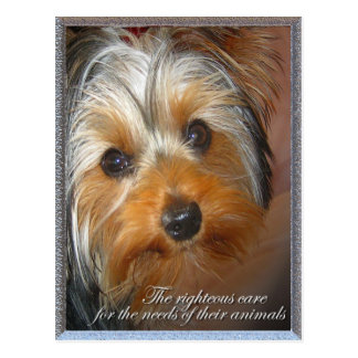 Needs of your animal Yorkie Postcard