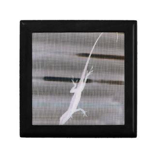 Negative image of a lizard on a window screen gift box