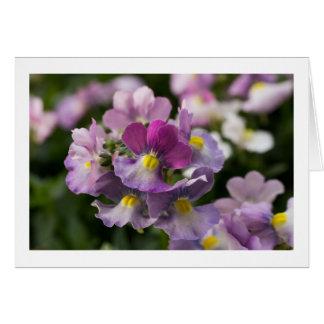 "Nemesia ""berries & cream"" greeting card"