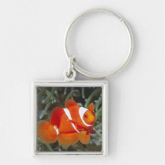 nemo fish Silver-Colored square key ring