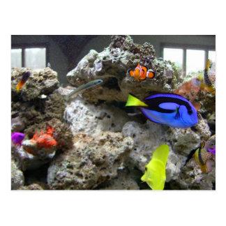 Nemo With His Gang Postcard