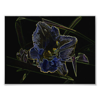 Neon Glow Daylily Flower with Glowing Edges Photograph