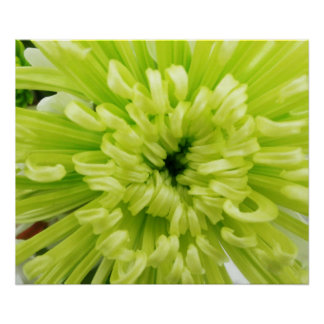 Neon Green Flower Football Mum Close Up Background Poster