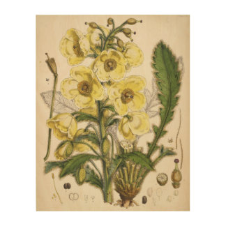 Nepal Poppy - Botanicals Collection Wood Prints