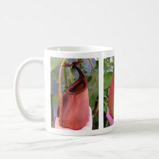 Nepenthes bicalcarata Photo Mug (3 photos)