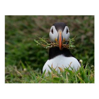 Nest Builder Puffin Postcard