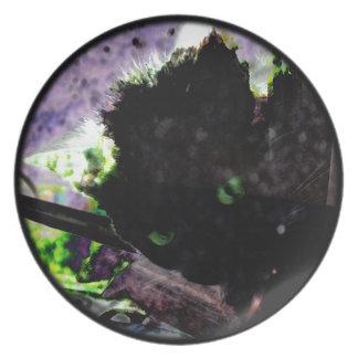Nest • Egg • Kitty Plate