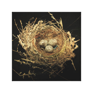 Nest with eggs canvas print