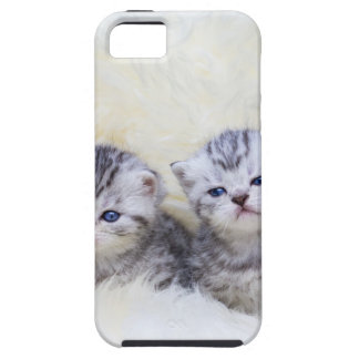 Nest with four young tabby cats in a row iPhone 5 covers