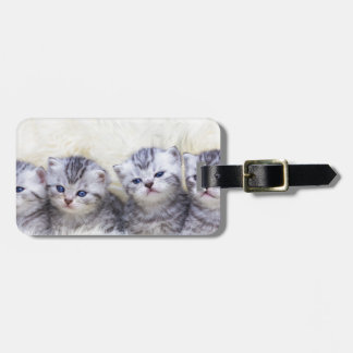 Nest with four young tabby cats in a row luggage tag
