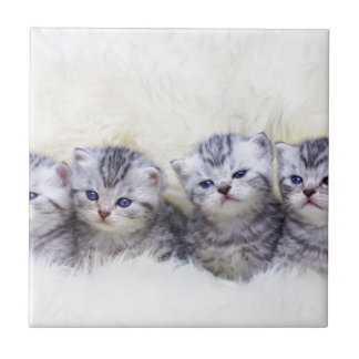 Nest with four young tabby cats in a row small square tile