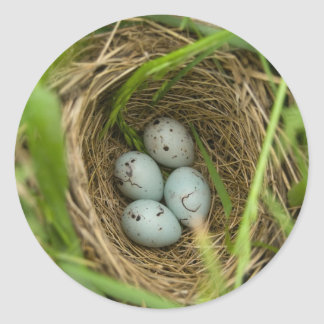 Nestful of Eggs Classic Round Sticker