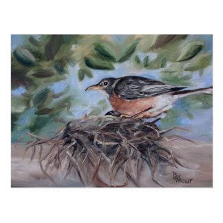 Nesting Robin Postcard