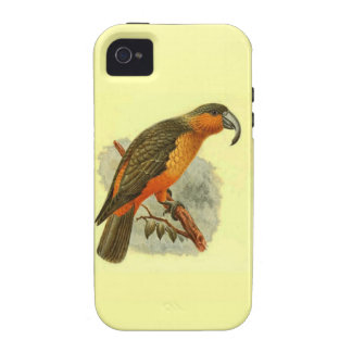 Nestor Norfolcensis Case-Mate Vibe iPhone 4 Case