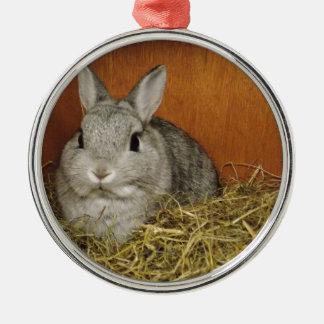 Netherland Dwarf Rabbit Christmas Ornaments