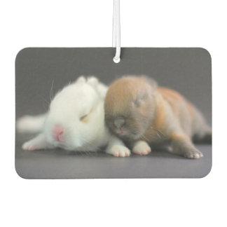 Netherland Dwarf Rabbits Car Air Freshener