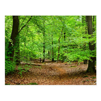 Netherland Forest Postcard